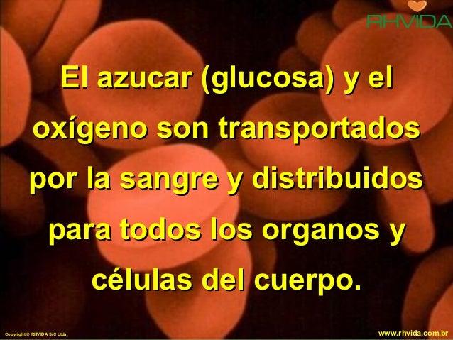 El azucar (glucosa) y el            oxígeno son transportados          por la sangre y distribuidos                  para ...