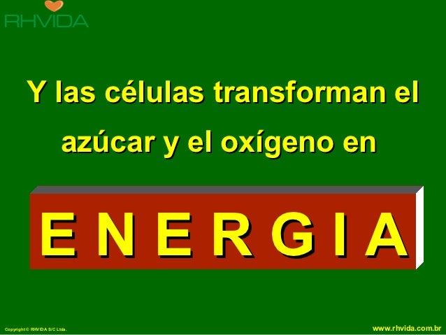 Y las células transforman el                         azúcar y el oxígeno en              ENERGIACopyright © RHVIDA S/C Ltd...