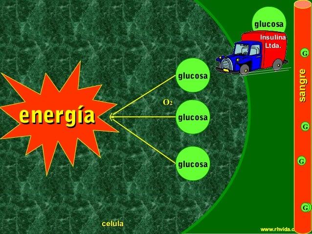 glucosa                                                        Insulina                                                   ...