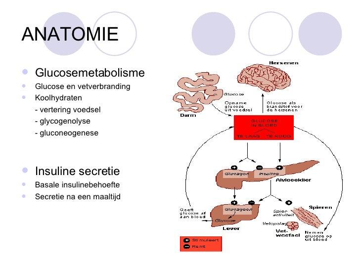 Anatomie diabetes