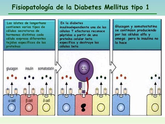 Diabetes mellitus tipo1