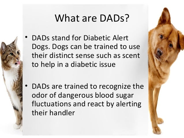 Scent Training Diabetic Alert Dogs
