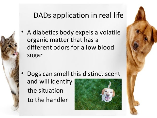What To Give A Dog With Low Blood Sugar