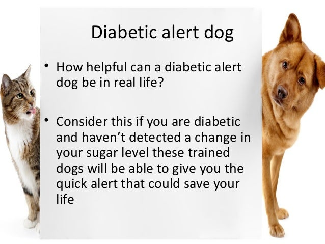 What To Give Diabetic Dog With Low Blood Sugar