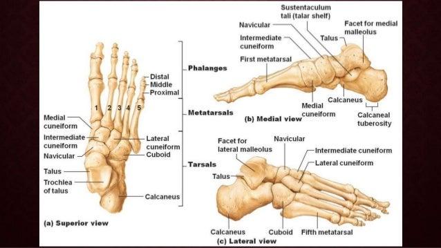 Diabetic foot Slide 2