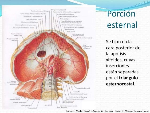 Anatomía de Diafragma