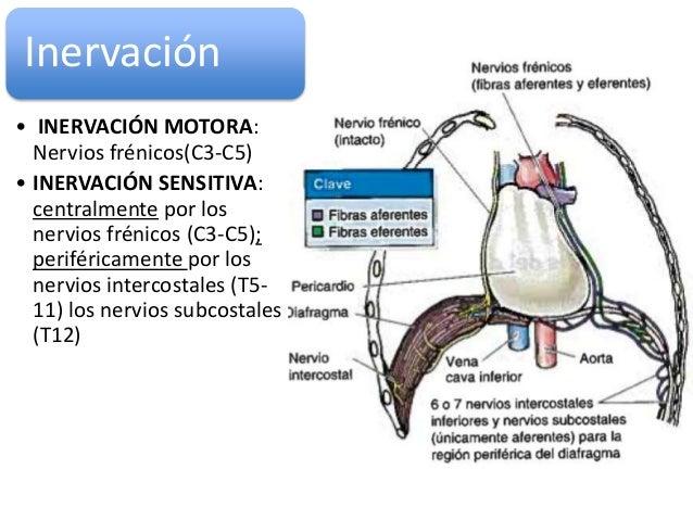 funcion y localizacion de los esteroides