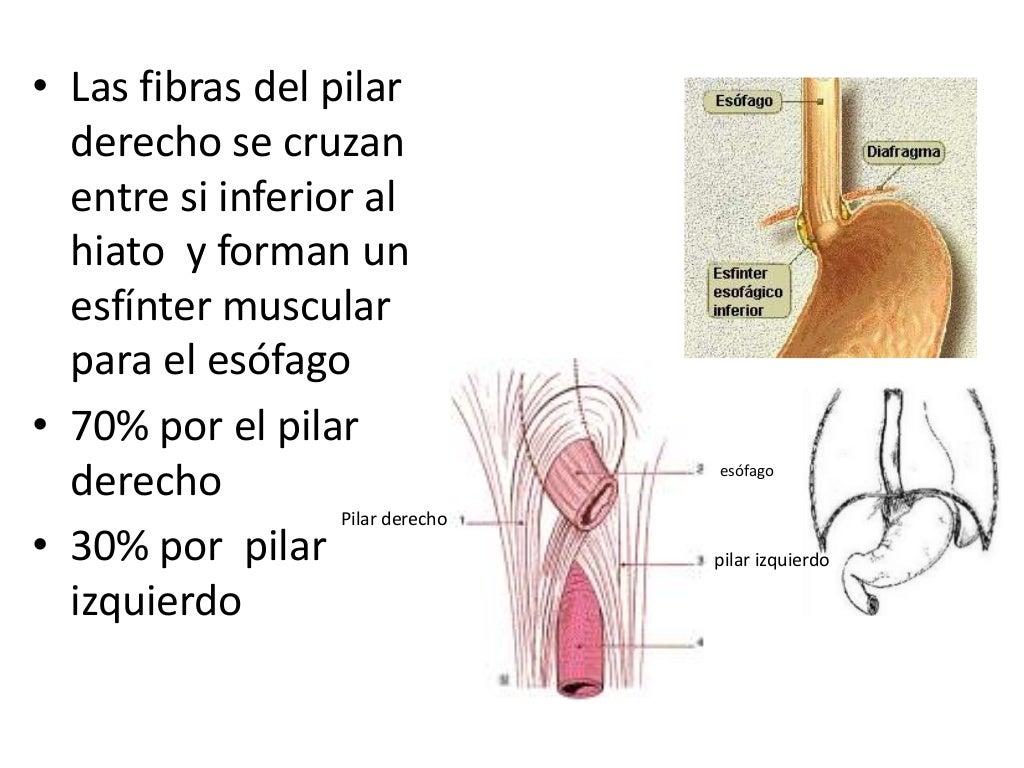 Diafragma inervación, hiatos