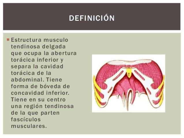 Diafragma Slide 2