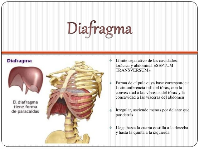 diafragma-1-638.jpg?cb=1416010104