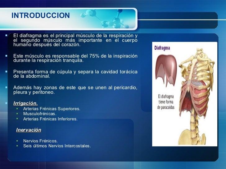 INTRODUCCION <ul><li>El diafragma es el principal músculo de la respiración y el segundo músculo más importante en el cuer...