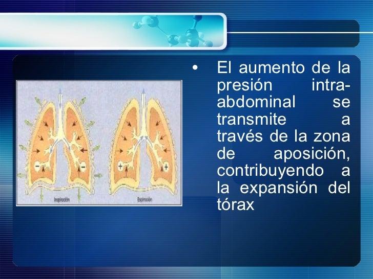 <ul><li>El aumento de la presión intra-abdominal se transmite a través de la zona de aposición, contribuyendo a la expansi...