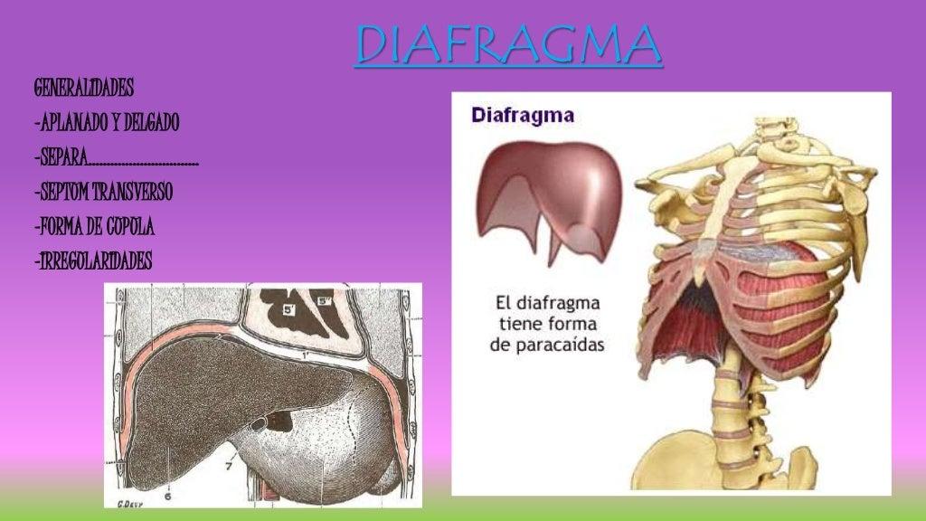 Diafragma respiratorio