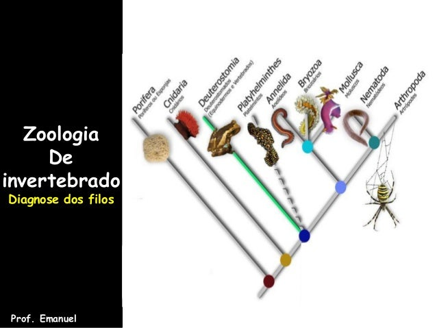 ZoologiaDeinvertebradoDiagnose dos filosProf. Emanuel