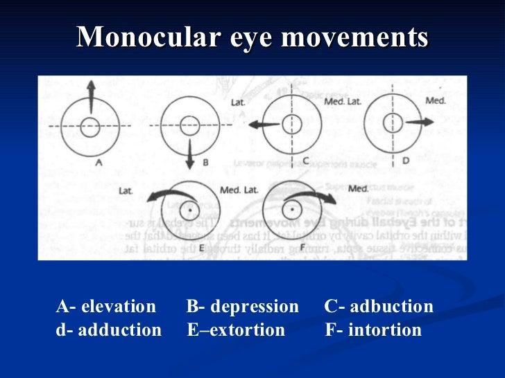 Monocular eye movements A- elevation  B- depression  C- adbuction  d- adduction  E–extortion  F- intortion