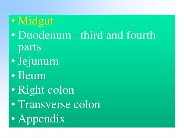 •Hindgut •Left colon •Sigmoid colon •Rectum