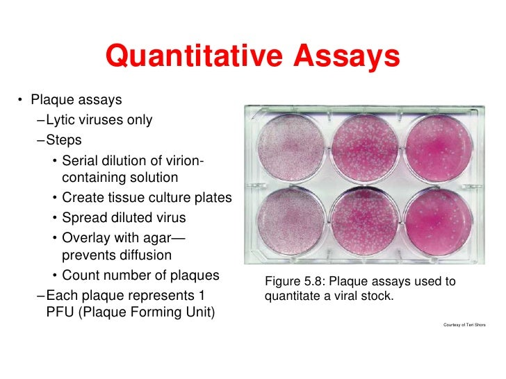 Quantitative Assays• Plaque assays   –Lytic viruses only   –Steps     • Serial dilution of virion-       containing soluti...