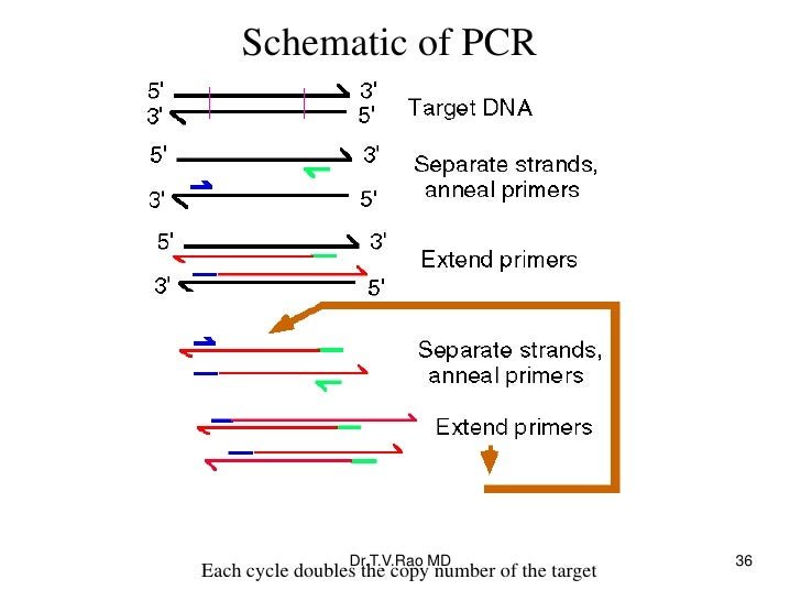 Schematic of PCR                 Dr.T.V.Rao MD                     36Each cycle doubles the copy number of the target