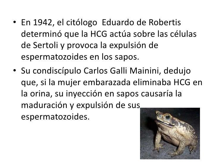 En 1942, el citólogo  Eduardo de Robertis determinó que la HCG actúa sobre las células de Sertoli y provoca la expulsión d...