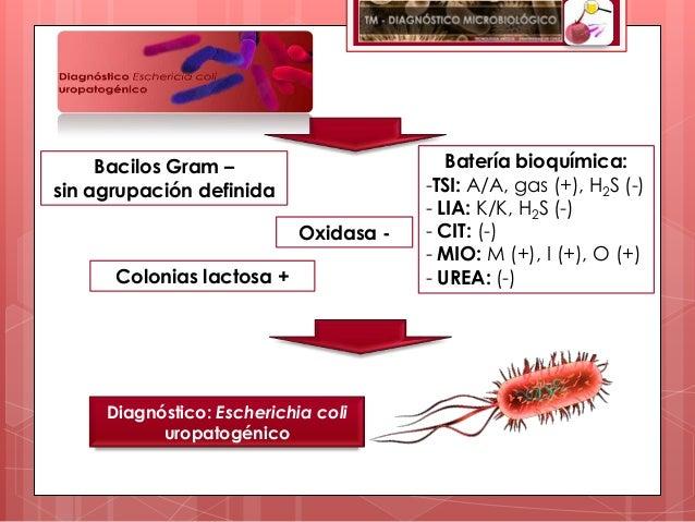 Bacilos Gram –                        Batería bioquímica:sin agrupación definida                 -TSI: A/A, gas (+), H2S (...