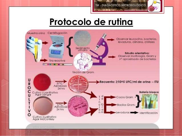 Protocolo de rutina
