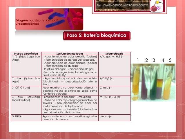 Paso 5: Batería bioquímica  Prueba bioquímica                     Lectura de resultados                   Interpretación1....