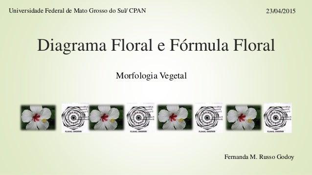Diagrama Floral e Fórmula Floral Morfologia Vegetal 23/04/2015Universidade Federal de Mato Grosso do Sul/ CPAN Fernanda M....