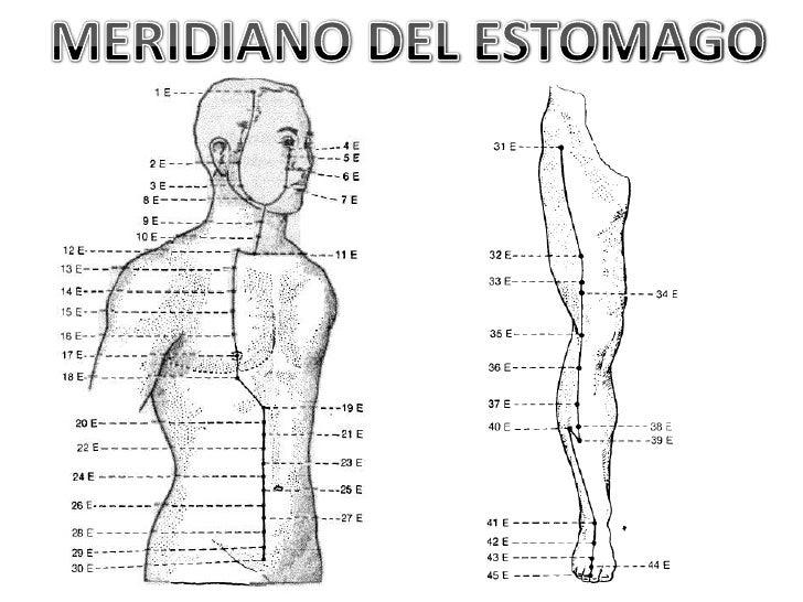 Resultado de imagen para CANAL DE ESTOMAGO   ACUPUNTURA