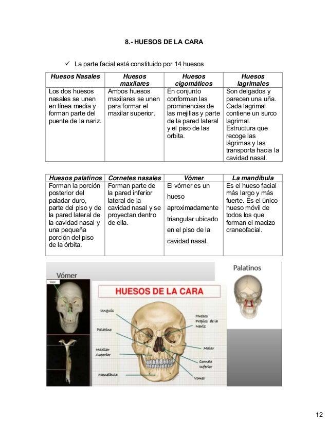 Atractivo Diagramas De Hueso Ideas - Imágenes de Anatomía Humana ...