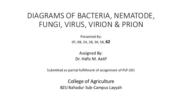 Diagrams of bacteria nematode fungi virus virion prion diagrams of bacteria nematode fungi virus virion prion presented by ccuart Choice Image