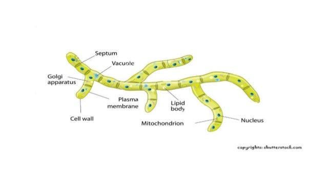 Diagrams Of Bacteria Nematode Fungi Virus Virion Prion