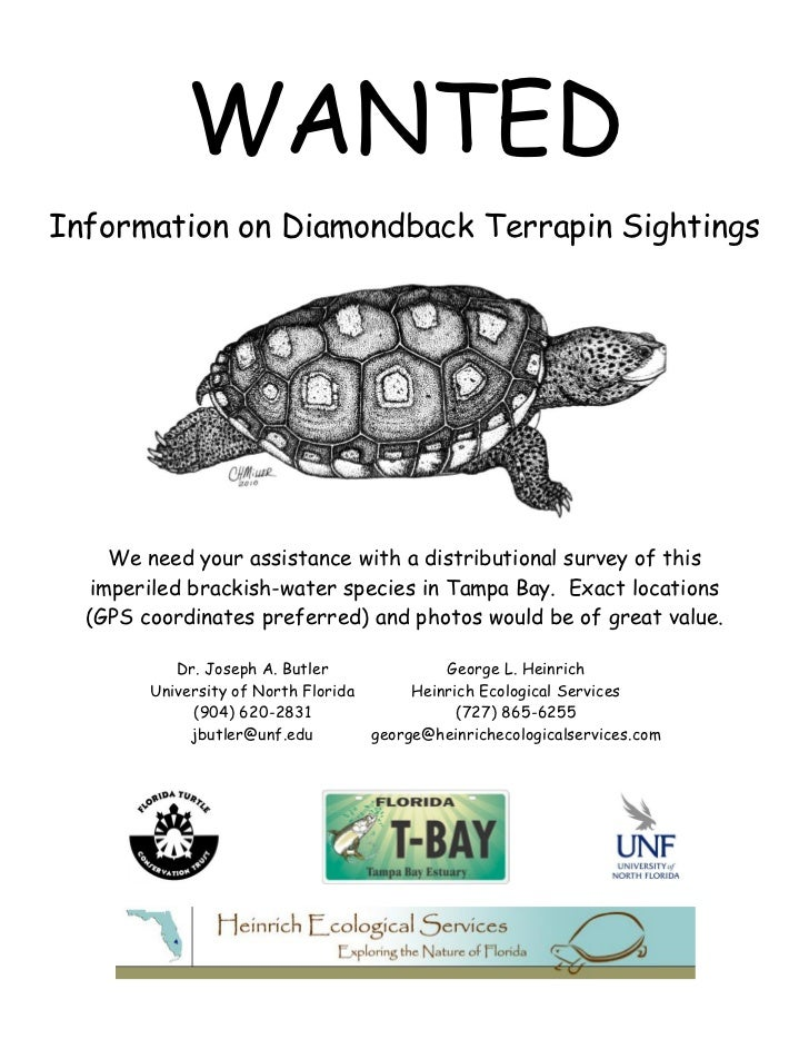 WANTEDInformation on Diamondback Terrapin Sightings     We need your assistance with a distributional survey of this   imp...