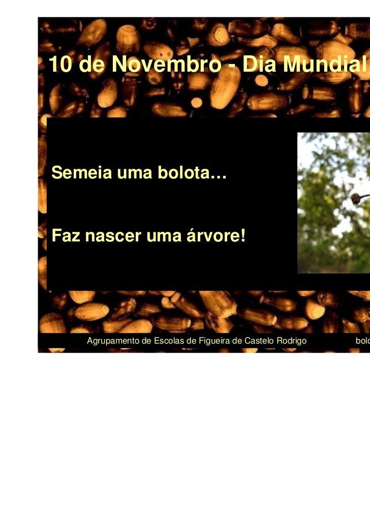 10 de Novembro - Dia Mundial da BolotaSemeia uma bolota…Faz nascer uma árvore!                                            ...