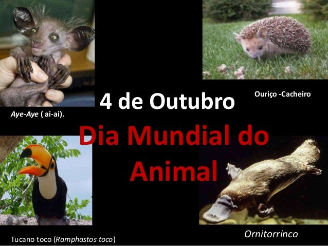4 de Outubro Dia Mundial do Animal Aye-Aye ( ai-ai). Ouriço -Cacheiro OrnitorrincoTucano toco (Ramphastos toco)