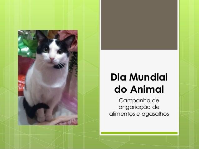 Dia Mundial do Animal Campanha de angariação de alimentos e agasalhos