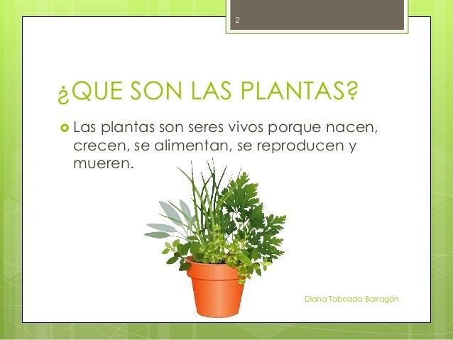 Las plantas for Que son plantas ornamentales ejemplos