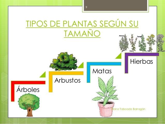 Las plantas for Tipos de arboles y sus caracteristicas