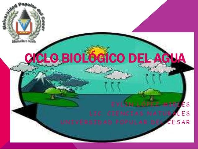 CICLO BIOLÓGICO DEL AGUA                EYLIN LÓPEZ MIELES           LIC. CIENCIAS NATURALES     UNIVERSIDAD POPULAR DEL C...