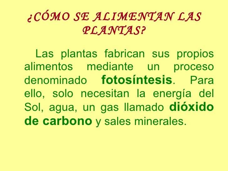 La planta - Cosas sobre las plantas ...
