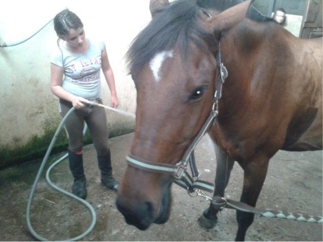 Croyez moi.. finir de drésser un poney comme elle c'est pas facile ! Mais elle vous apporte le bonheur qu'aucun être humai...