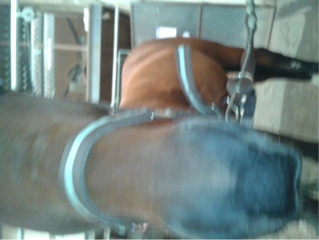 Vous voyer vous dîtes tous que le cheval n'est pas un sport.. pas une pation ! 10 ans , 10 ans de galère , de rire , de pl...
