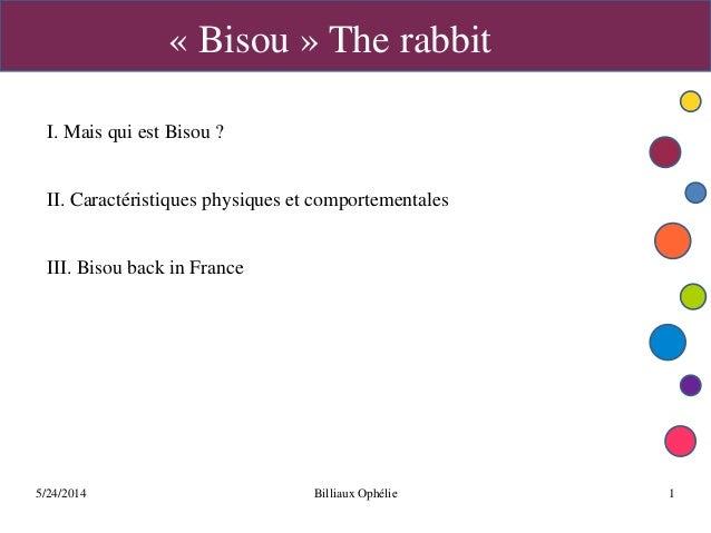 5/24/2014 Billiaux Ophélie 1 « Bisou » The rabbit I. Mais qui est Bisou ? II. Caractéristiques physiques et comportemental...