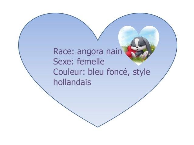 Race: angora nain bélierSexe: femelleCouleur: bleu foncé, stylehollandais
