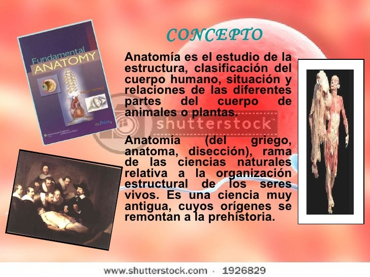 Radioanatomia Conceptos Basicos