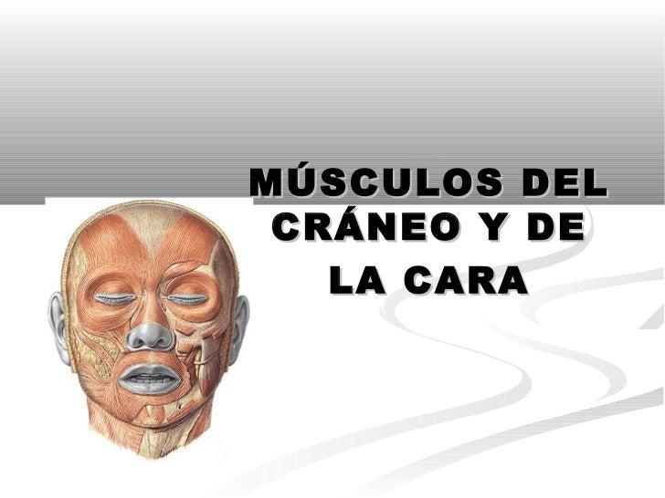 MÚSCULOS DEL CRÁNEO Y DE   LA CARA