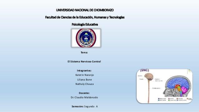 Neuroanatomia - sistema nervioso central Slide 1