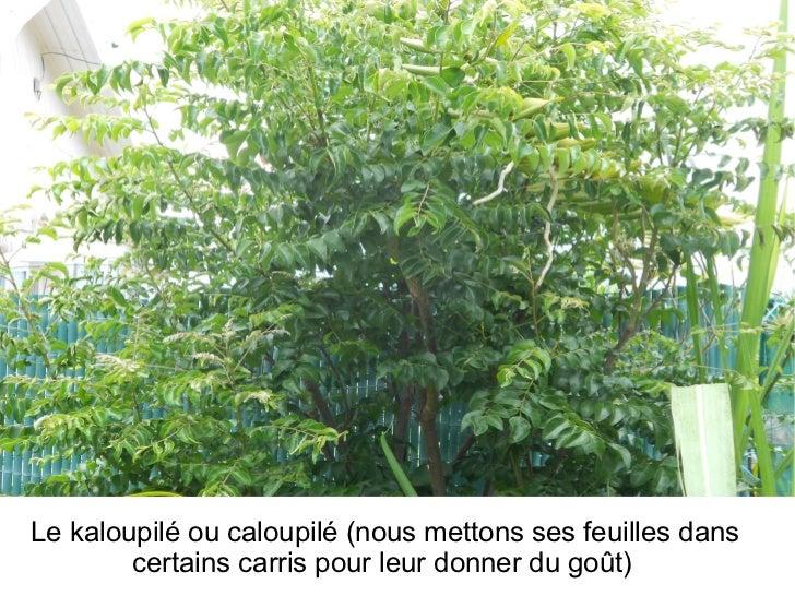 Fleurs arbres et plantes for Arbres plantes fleurs