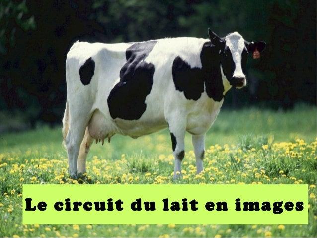 Le circuit du lait en images