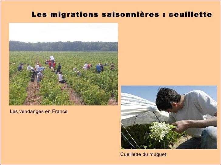 Les migrations - Office des migrations internationales ...