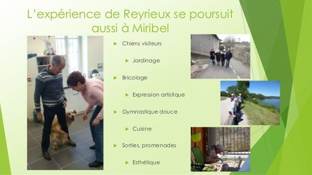 L'expérience de Reyrieux se poursuit aussi à Miribel  Chiens visiteurs  Jardinage  Bricolage  Expression artistique  ...